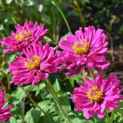 Kevadised aiatööd