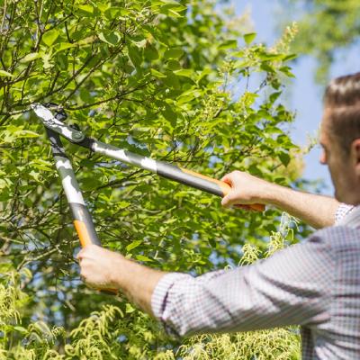Puude ja põõsaste lõikamise ABC