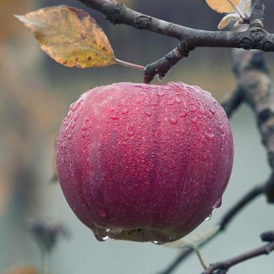 Kuidas aed õigesti talveks ette valmistada?