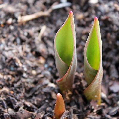 Как навести порядок в саду к весне