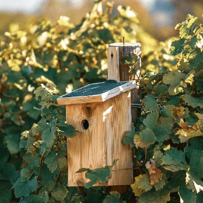Пошаговая инструкция  строительства домика для птиц