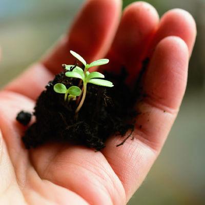 Mida tuleb teada taimede etteistutamise kohta?