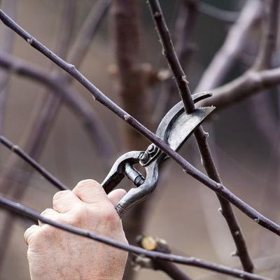 Viljapuude ja marjapõõsaste lõikamine